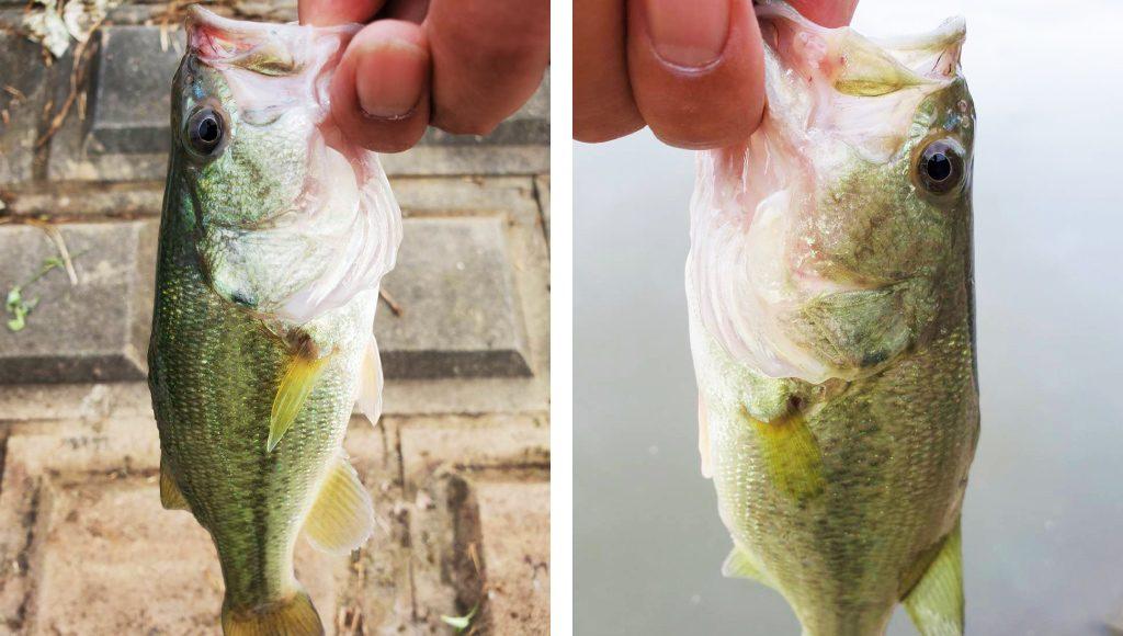 秋の減水時にやってほしい必釣リグ
